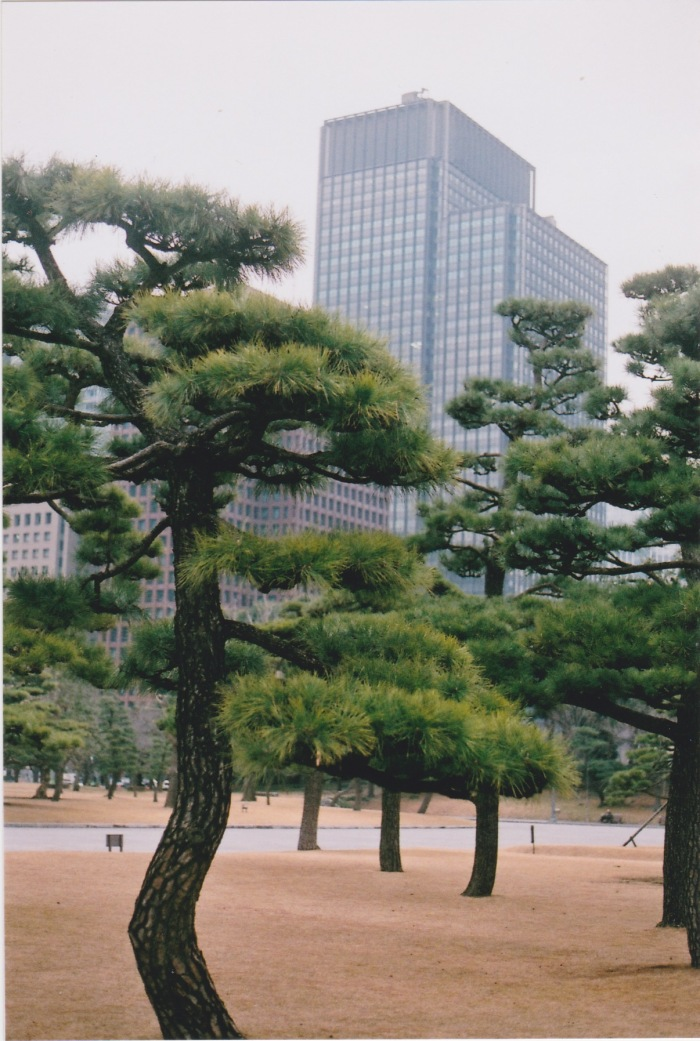 ginza trees 1