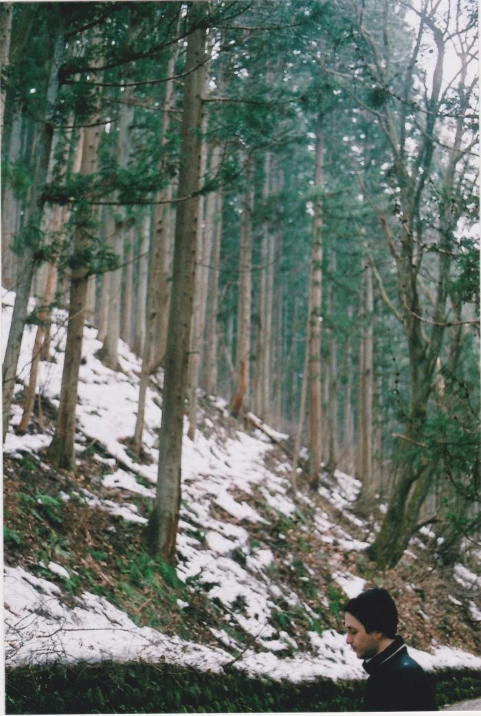 pat in trees