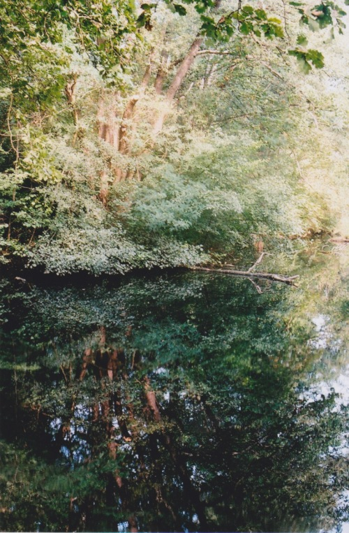 forest-water-2